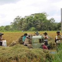 more modern way of rice harvesting