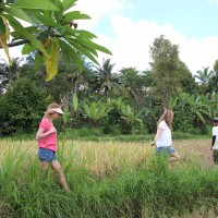 a little walk through rice paddies