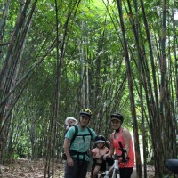 bamboo forest with family