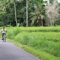 rice paddies ride