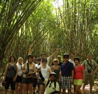 Daniel group - bamboo forest