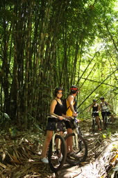 bamboo forest stop