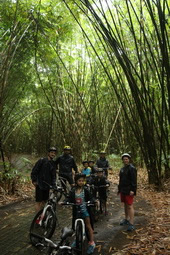 bike ride through bamboo forest