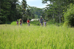 Family bike tour in the middle of rice paddies