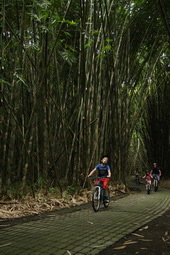 bamboo forest with kids