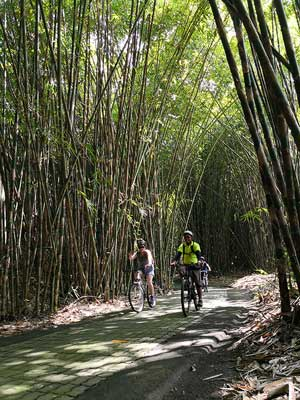 bike ride through the bamboo forest