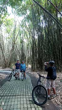 bamboo forest photo spot