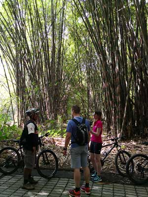 cycling through the bamboo forest