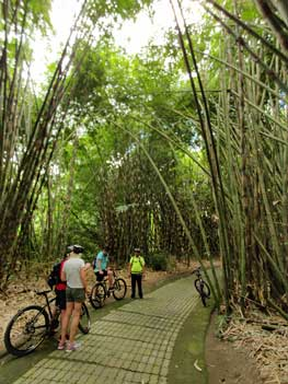 amazing bamboo forest