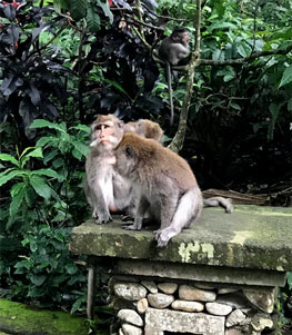 Ubud tours - Monkey forest