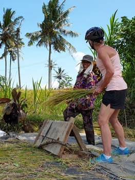 interact with local balinese farmer - rice harvesting