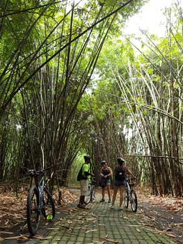 bamboo forest bike ride bali