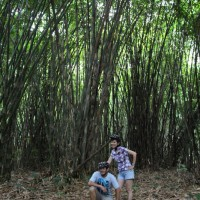 photo inside bamboo forest