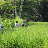 ride through rice paddies