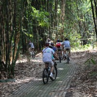 bike tour in bamboo forest
