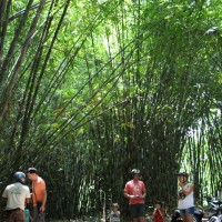 exploring bamboo forest