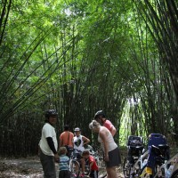 children playing at bamboo forest