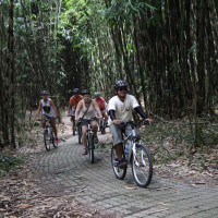 bike riding through the bamboo forest