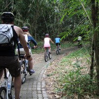 riding inside the bamboo forest