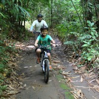 cycle through bamboo forest