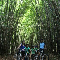 photo session in bamboo forest