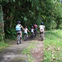 cycle into bamboo forest