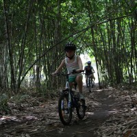 cycle through the forest