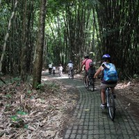 fantastic ride through bamboo forest