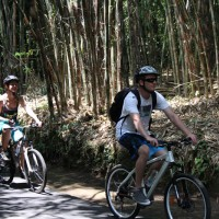 ride through the bamboo