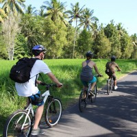 biking along the rice fields