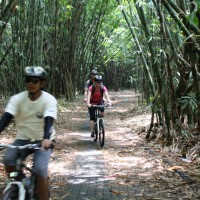 biking inside bamboo forest #1