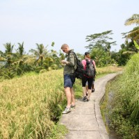 short trekking through rice paddies