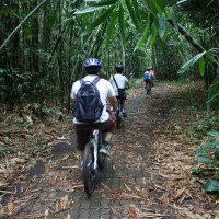 bamboo forest cycling routes #1