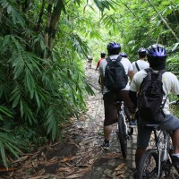 bamboo forest cycling routes #2