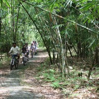 bamboo forest cycling routes #3