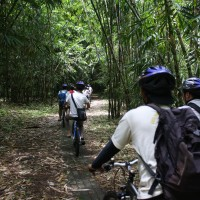 bike trips amid bamboo forest #1