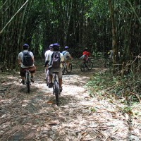 bike trips amid bamboo forest #2