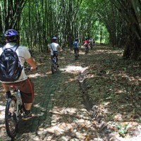 bike trips amid bamboo forest #3