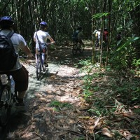 bike trips amid bamboo forest #5