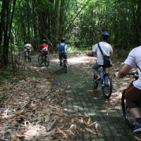 end of bamboo track #2