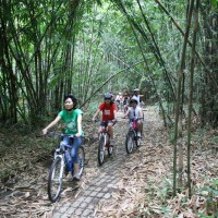 bamboo forest cycling #4