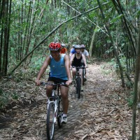 bamboo forest cycling #5