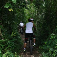 cycle through plantation #1