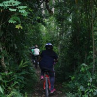 cycle through plantation #3