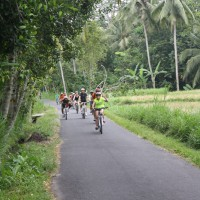 rice paddies cycling #1