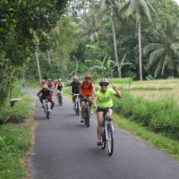 rice paddies cycling #2