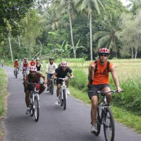 rice paddies cycling with group