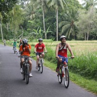 rice paddies cycling #4