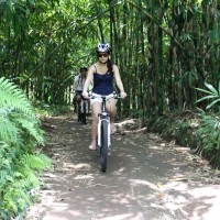 Brenda through the bamboo forest