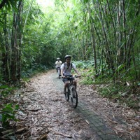 amazing bamboo forest track #3